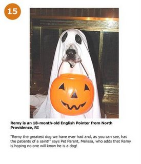 Halloween For Pets