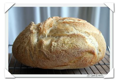 2006 the new york times no knead bread no-knead bread attempt by sam breach of becks & posh food blog with notes on high altitude baking and baking the recipe without a dutch oven or le creuset with lid - bake directly on a baking sheet