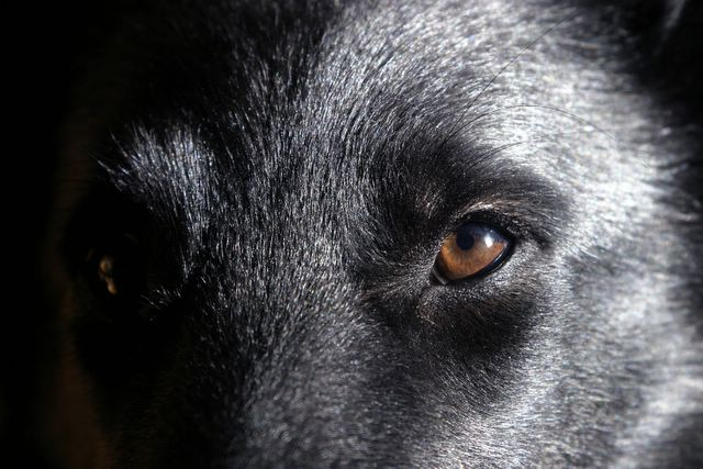 nexgard comprimé pour chien