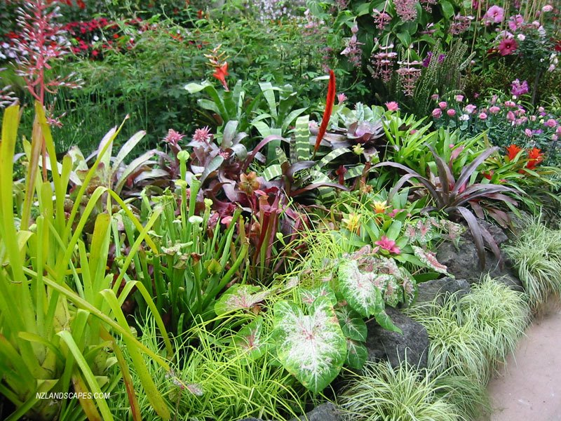 Garden Ideas For Landscapers Auckland New Zealand Winter Gardens Tropical
