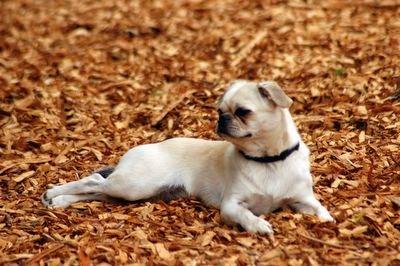 Image Result For Huntington Dog Park