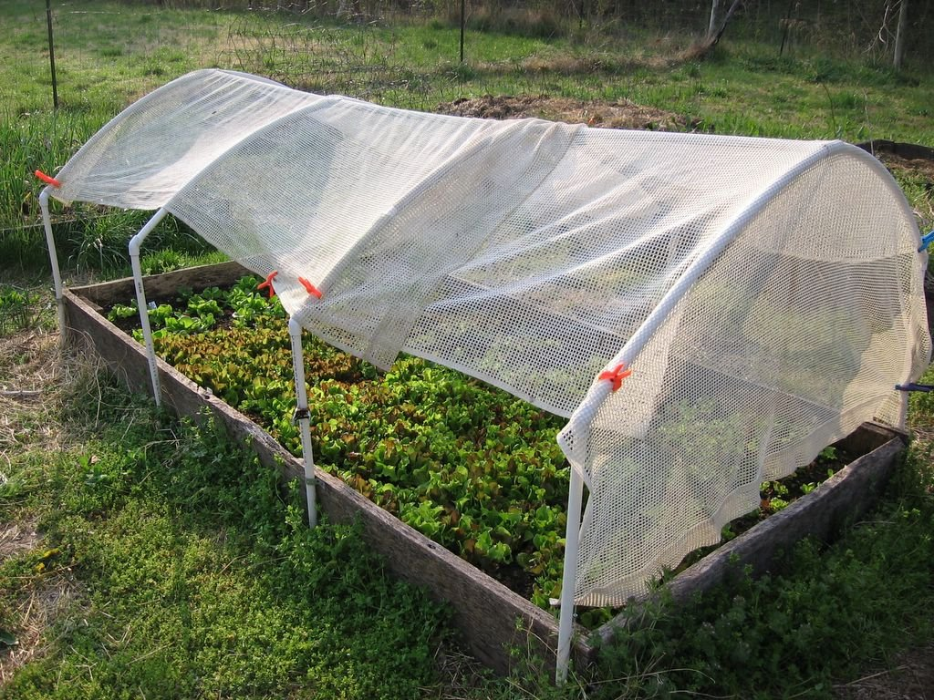 Gardening On The How To Quickly And Easily Shade Lettuce Other Plants Why You Should
