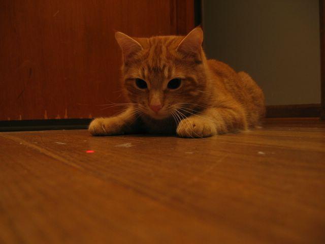 interactive kitten video