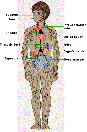 The Cocoon Man 天蚕人: Health :Your Body's Time Clock