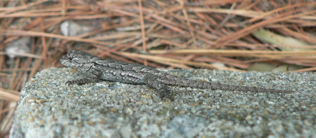 Swampthings Tis The Season For Baby Reptiles