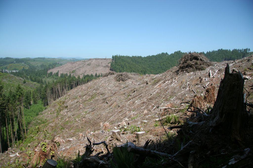 Coastal Oregon clearcutting, tree-farming, logging