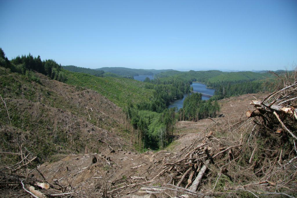 Coastal Oregon clear-cutting, tree-farming, logging