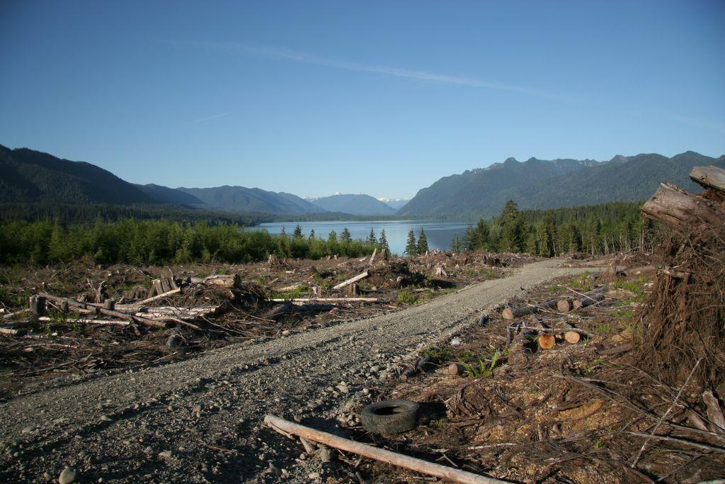 Clearcutting Olympic Peninsula, logging, tree-farming, Washington, Weyerhauser, Olympic National Park