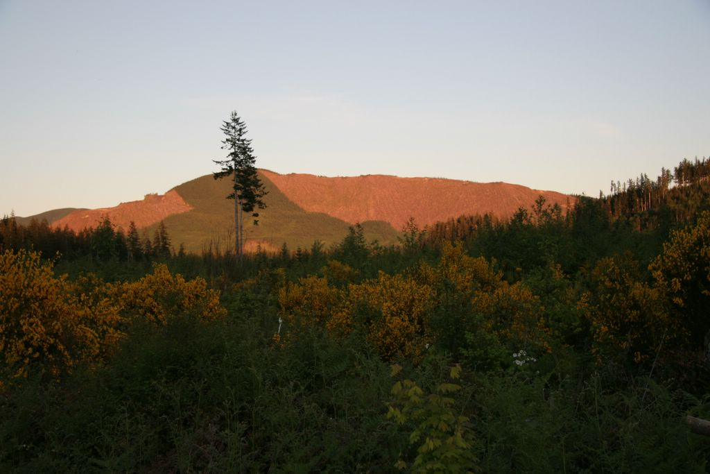 Clearcutting Olympic National Forest Washington