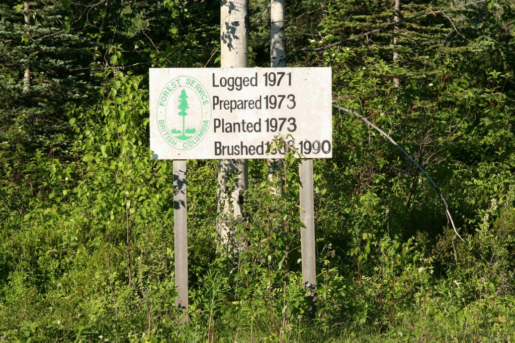 forest management on Cassiar Highway, British Columbia