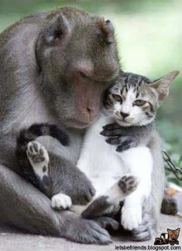 monkey-cat.jpg
