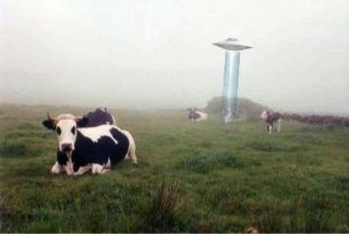 Saucer Abducting Cow