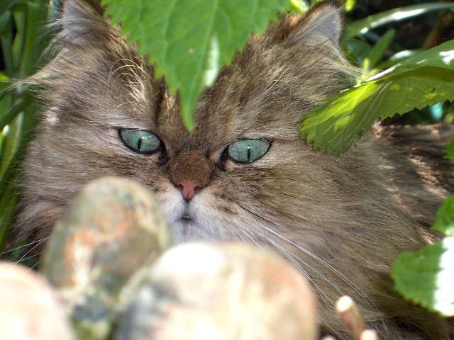 90296c544c4 TYCKY m a envoye les photos de ses 11 chats