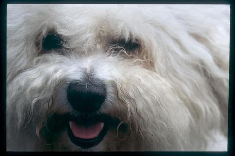 Pedigree Small Dog Food Recall
