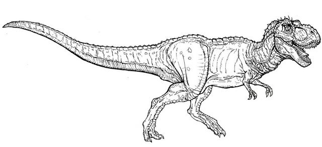 t rex and spinosaurus coloring pages - photo #26