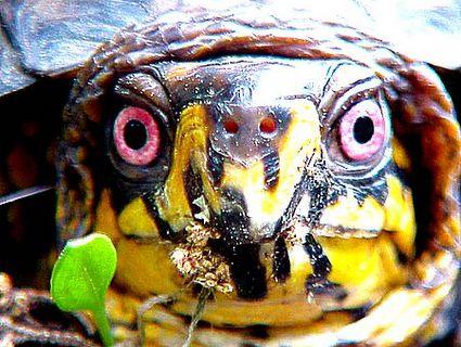 Pratie Place Box Turtles