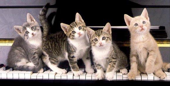 Travelling Kittens Airport Site Www Reddit Com
