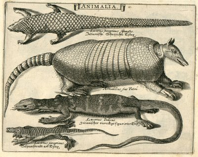 Armadillo and Lizards