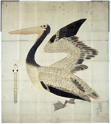 Pelican from rare Japanese book