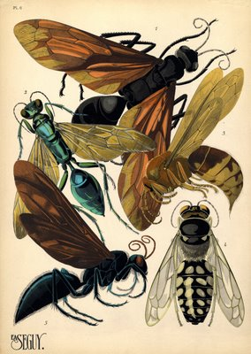 pochoir prints of insects by E. A. Séguy