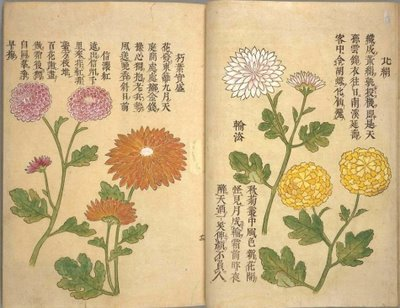 Flowers from rare Japanese book