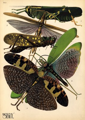 E. A. Séguy prints of insects