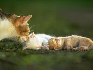 cat_0061.jpg