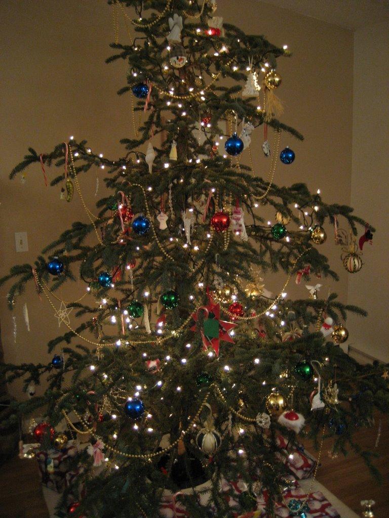 An Alaskan Christmas Tree For Me