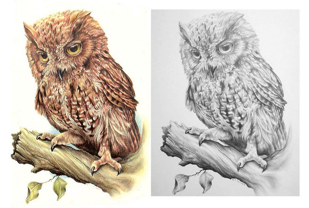 Kenny Oliver's Art: Screech Owl - Color Pencil Illustration