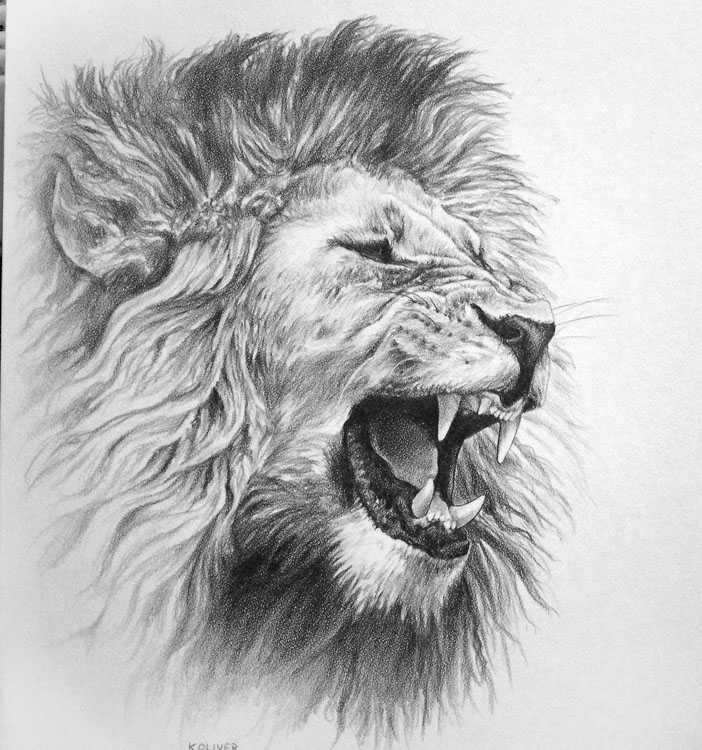 Lion Pencil Drawing Si...