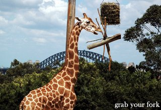 giraffe and Sydney Harbour Bridge