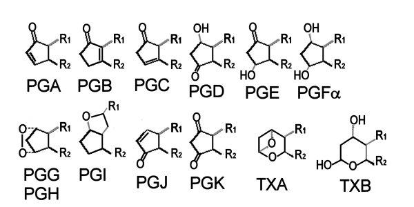 pathways  eicosanoid biosynthesis