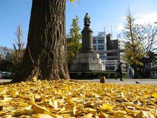Ginkgo leaves, autumn, Yasukuni Shrine, Tokyo.