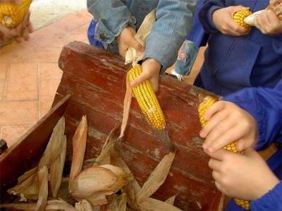 Lavorazione Del Mais.Il Museo Contadino La Lavorazione Del Mais Granturco
