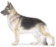 german Os dez cachorros mais inteligentes e os mais burros