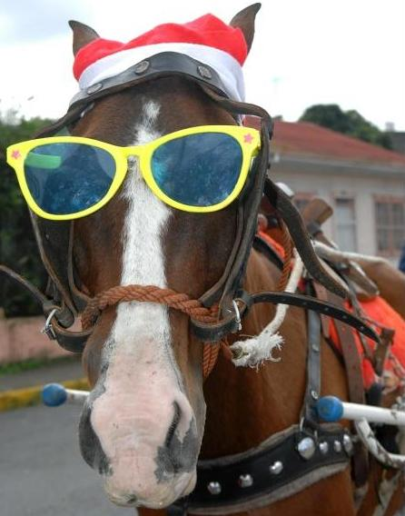 Tiquicia S Blog Horse Parade Takes San Jose