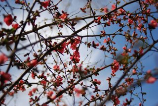 Jarná prechádzka Malackami