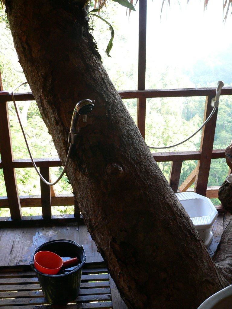 gibbon experience treehouse