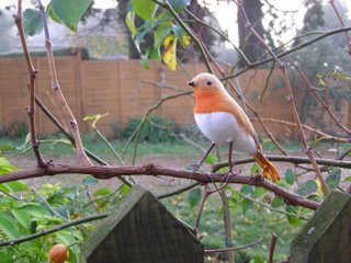 A robin on the branch of a bush