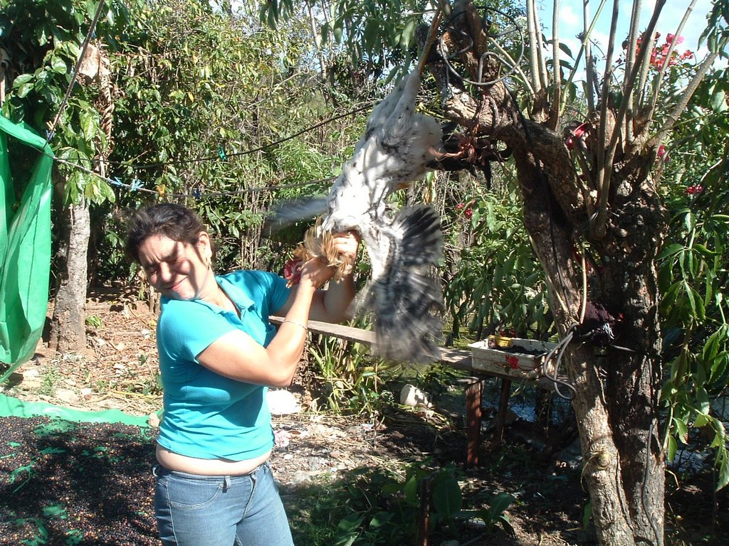 Honduras: Chickens! How to kill a chicken!!! good eats!