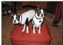 Lulu & Phoebe Pack Their Bag