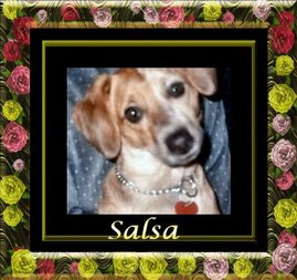 My dog Salsa