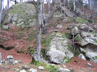 Pe drumul forestier de la Gura Teghii