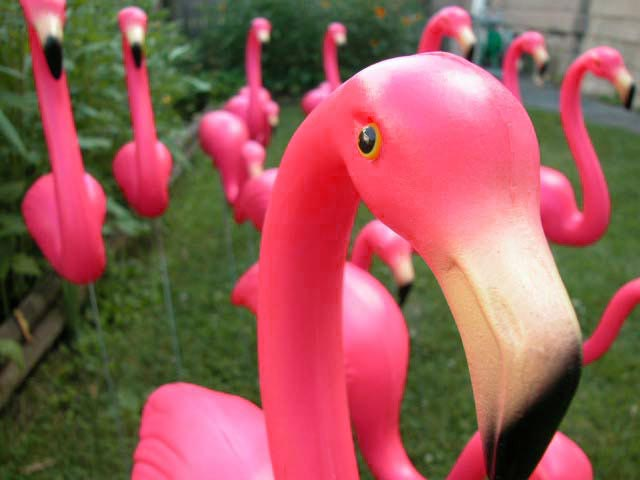 Of The Pink Flamingo