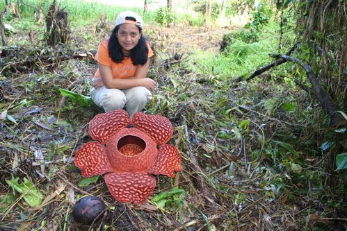 The Discovery of Rafflesia schadenbergiana in Central Mindanao