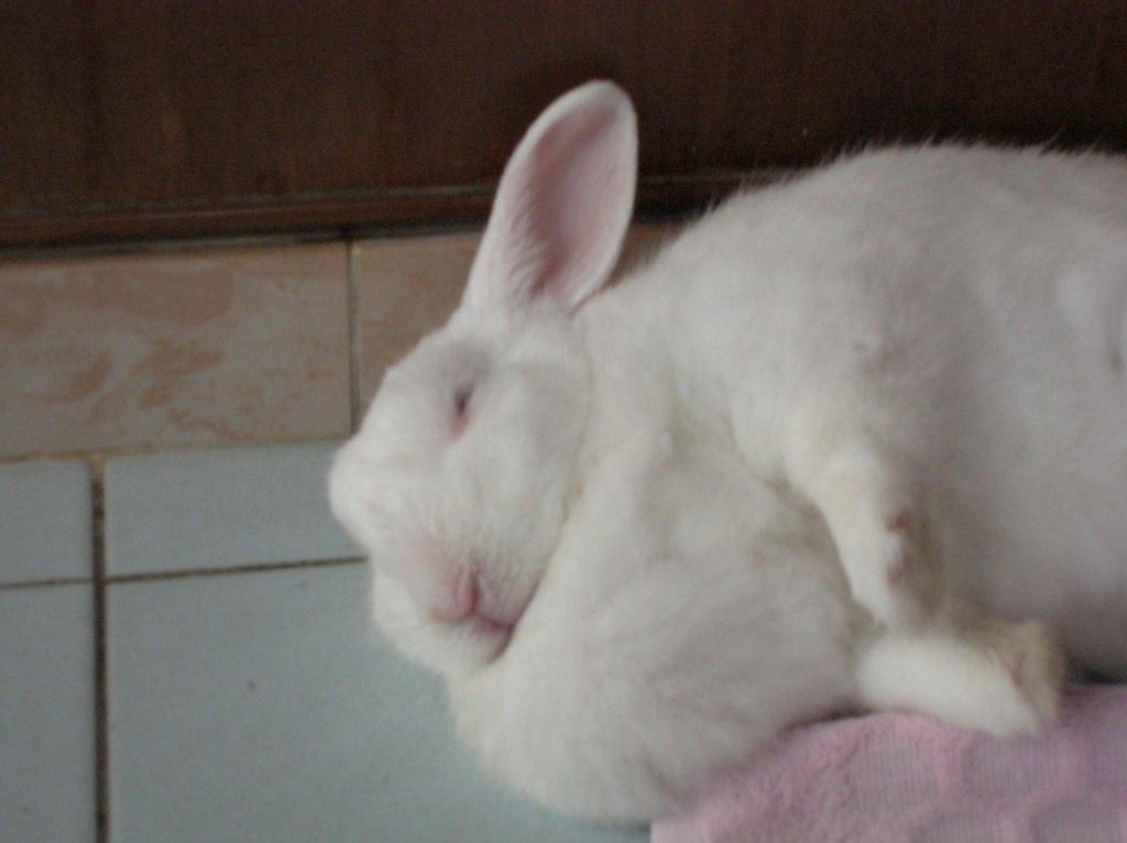 Rabbit Fat 43